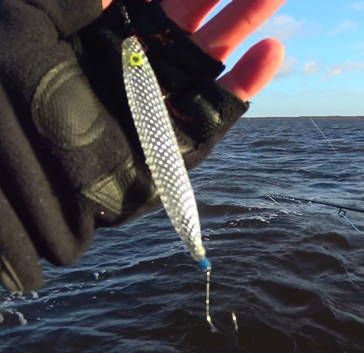 kustfiske efter havsöring